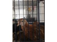3 chicks free to good home