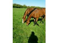 Horse sitter. Caring for your horses in their own home