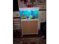 Fish tank with 50+ fishies