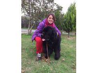 Dog walking, Dog and pet sitting & Home visit