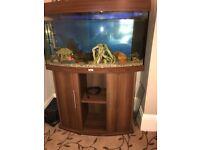 Juwel fish tank with cat fish