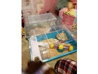 Dwarf hamster with cage and all accessories