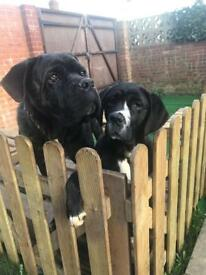 Romeo&Julia looking for a new home