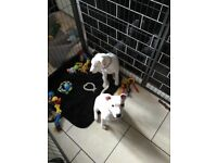 Two rescue Puppys beautyfull
