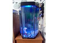 SWAPS Lovefish Prism tank