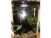 Betta Fish, 30litre Biube tank and all accessories Full and complete set up
