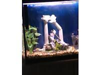 Fish tropical tetras