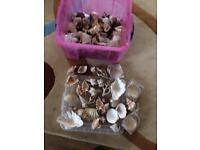 Job lot of mixed shells