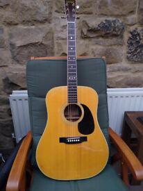 Cat's Eyes Guitar