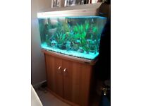 165 litre fish tank aquarium, storage display cabinet with all accessories and fish