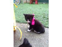 Healthy Cute Kittens ready