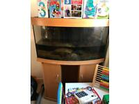 Juwel 180 bow front fish tank and cabinet