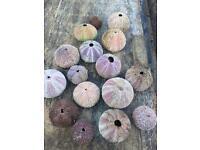 Sea urchins garden ornament