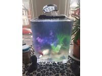 20l fish tank wuth triple filter and air pump with l.e.d lamp ornaments..