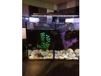 Berta fish tank