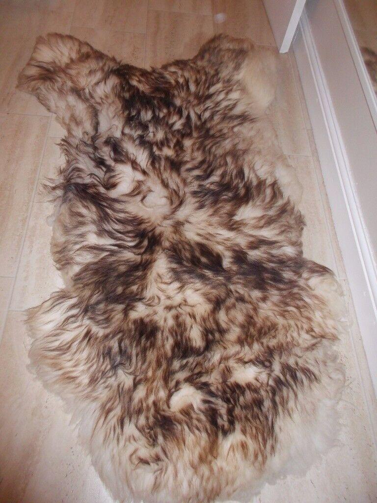 real sheep's rugs