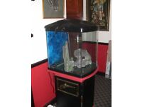 aquarium and cabinet with all fittings