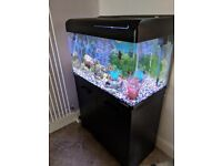 Fish Tank Aquarium 127ltr Very Good Condition with Cabinet Stand and Filter Ideal for Beginners