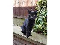 Black cat with some white flecks lost in salford/swinging boarder area.