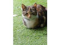 BEAUTIFUL FEMALE CAT FOR SALE