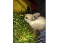 Bunnies/ cute baby rabbits for new home