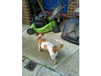 Petrol mower have owned from new