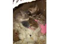 7 baby bunnies with their mam and dad and new cage