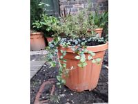Variety of large planters