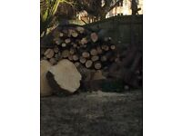 Spruce tree logs available for free.