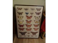 Large butterfly picture in brown frame