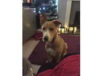 Dogs For Sale In Lincolnshire Gumtree