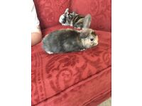 Three beautiful baby rabbits for sale