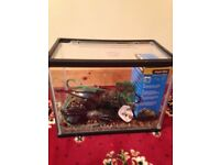 12 Litre glass fish tank and accessories