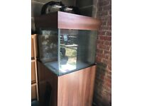 Fish tank with sump