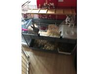 Indoor double rabbit cage