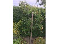 Garden work required