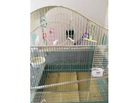 *FREE* *SSTC* 2 Budgies and equipment Free to a good home