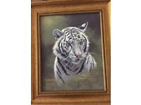 Beautiful tiger portrait set