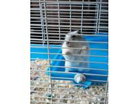3x syrian hamsters and own cage