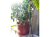 Tropical plants from £5-£20