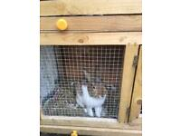 2 male rabbits and hutch