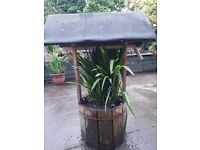 Wishing well barrel with giant welsh lily