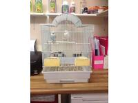 2 stunning budgies with cage and accessories