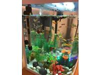 Fish tank with more than 40 fishes