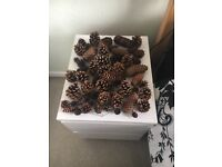 Selection Of Real Dried Cones