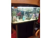 200 ltr fish tank, complete set up plus fish & extras