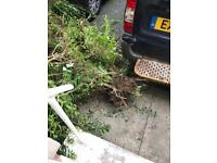 6ft free Hedge with full roots attached could replant