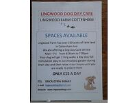 Dog Day Care in Cottenham