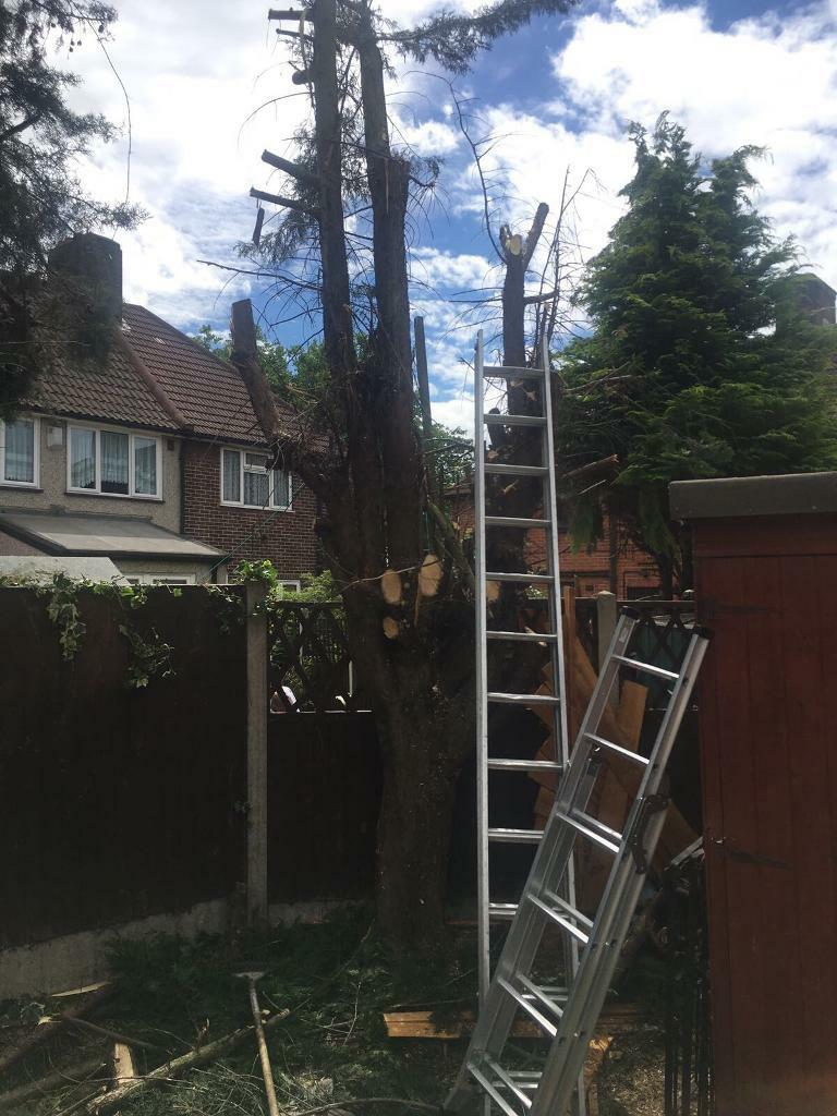 M&M Tree surgeon Gardening and landscape and Rubbish and demolition house clearance London services