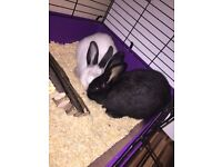 13 week old rabbits for sale
